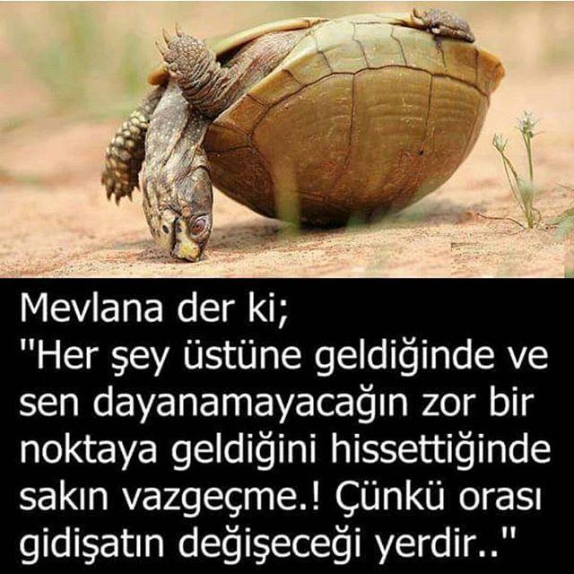@saglik.ve.spor
