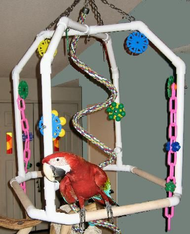 Best Of Large Parrot Play Gym