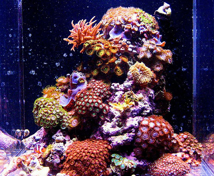 Karlo 2009 featured nano reefs featured aquariums for Aquarium recifal nano