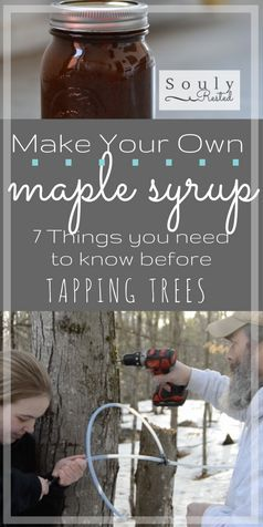 Homemade maple syrup   DIY maple syrup   how to tap trees for maple syrup   tapping trees   syrup supplies   what you need to know before you tap your trees   making syrup   making maple sugar   making maple cream   video tapping trees   running tubing for maple sap
