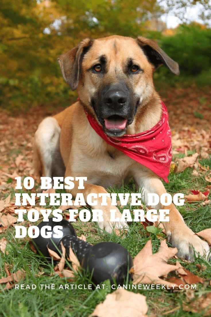15 Best Interactive Dog Toys For 2020 Interactive Dog Toys Dog