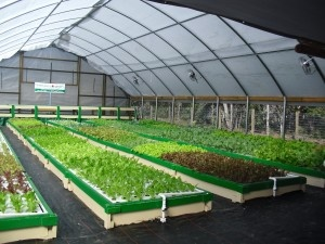 Commercial greenhouse sytem