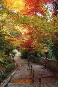 松山市の城山公園紅葉が少しずつ広がってきましたー(ˊᗜˋ) ノ  久しぶりに1人でダイエットも兼ねてウォーキングしてきました今月の半ばから一気に気温が下がったことで紅葉してきたみたい()  週末はまた家族連れで賑わいますよ今から城山公園は紅葉の見どころです(o)/ tags[愛媛県]