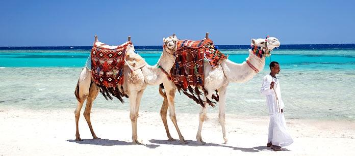 Marsa Alam en yngre turistort jämfört med Hurghada. De vackra sandstränderna och de berömda korallreven finns också här. Snorklingen kan kallas bland den bästa i världen!