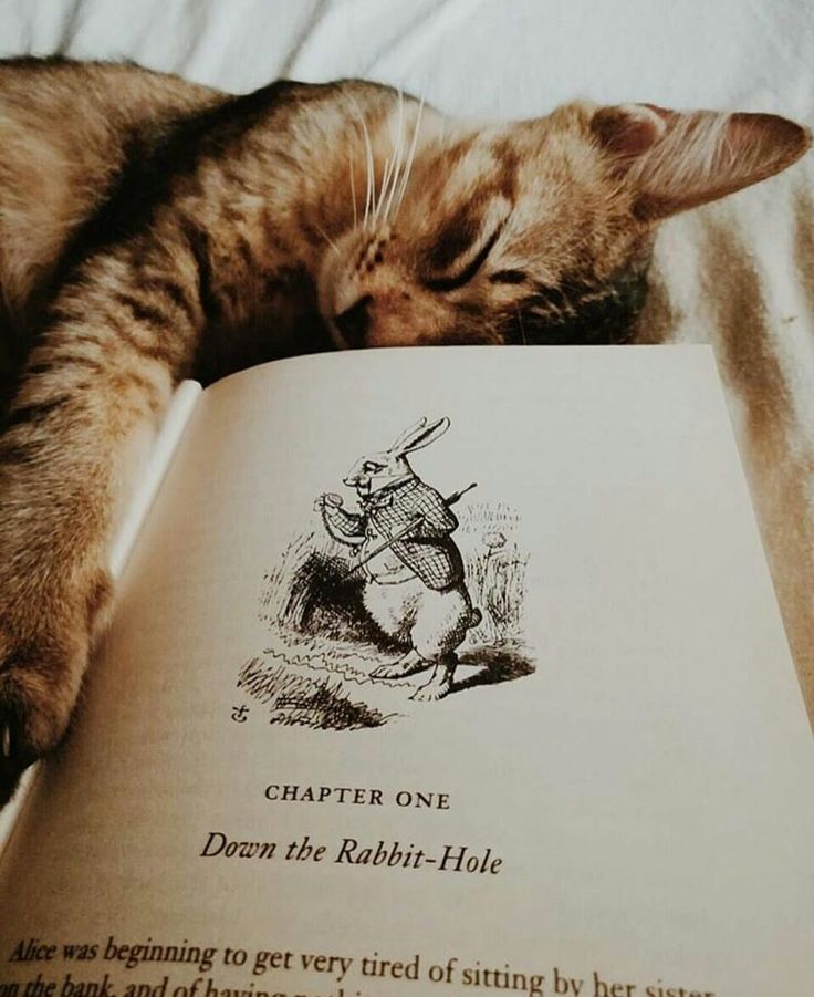 Tamra maew cat book poems