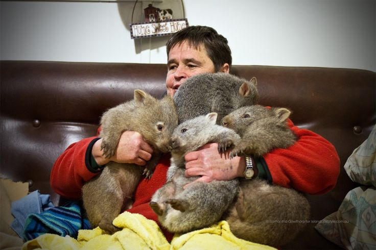 Wildlife carer Kate specialises in wombats and has become a rescuer/identity in animal caring circles - this charming article paints a great picture of life on Flinders Island, Tasmania