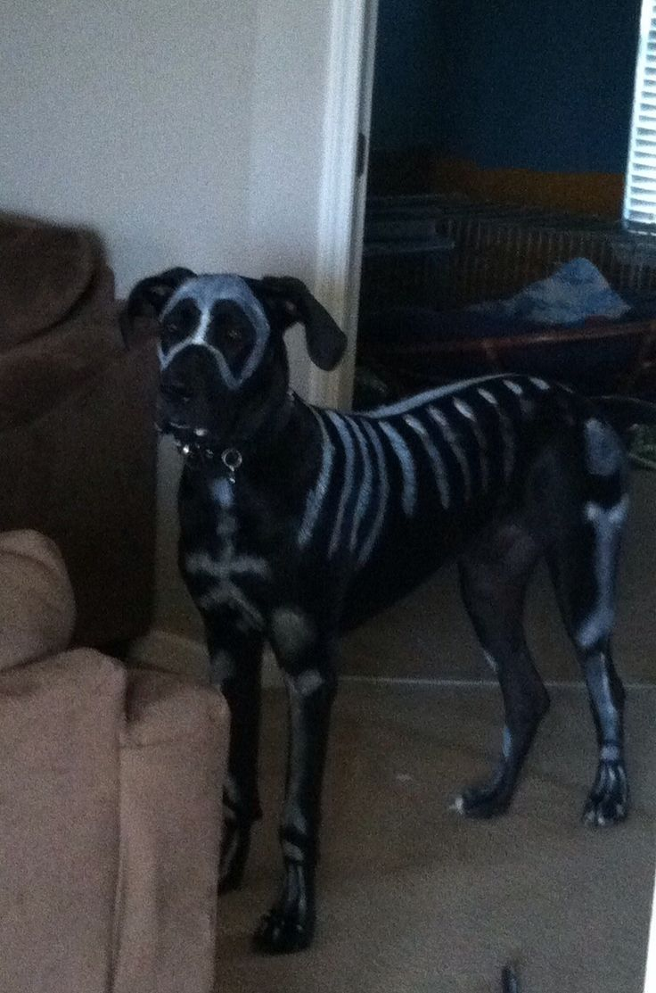 What an awesome idea of Halloween costume for #Great #Dane !  I am so doing this to my Mace this next Halloween.