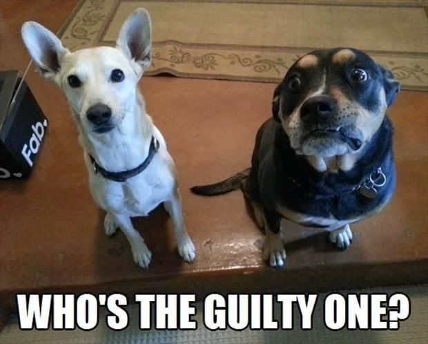 Funny Guilty Dog Meme