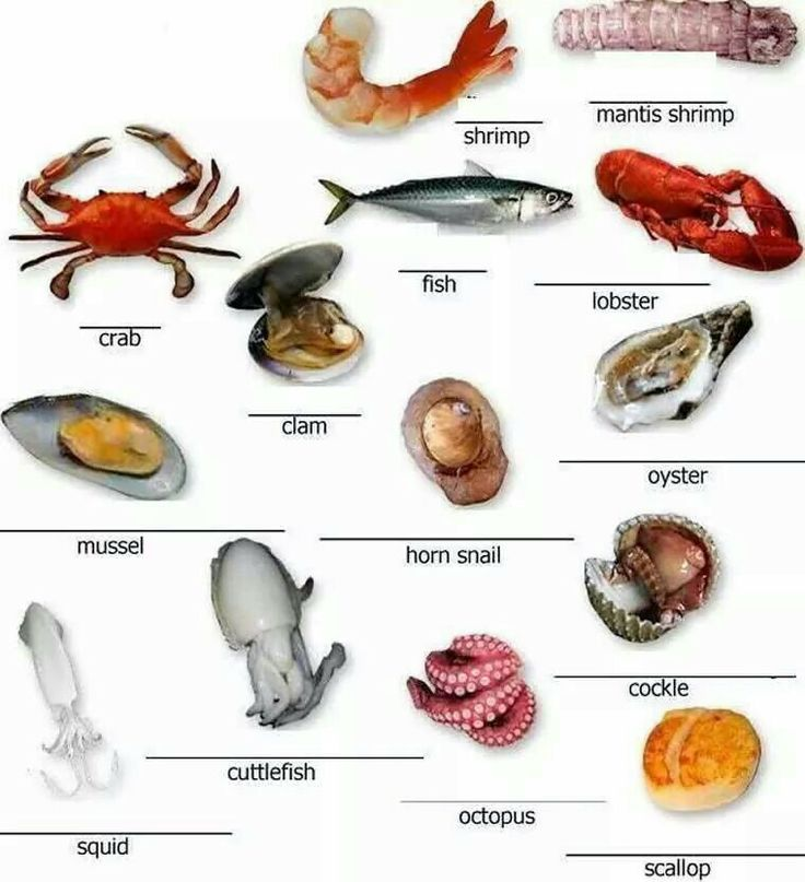 Seafood vocabulary.