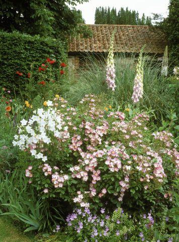 Best 25 tall flowers ideas on pinterest design of for Cottage garden design zone 5