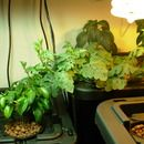 Step 0: How to Build a Home Hydroponics System