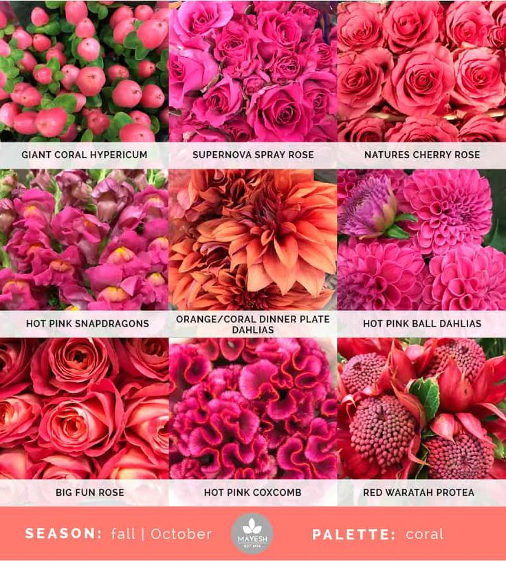 Mayesh Cooler Picks - Fall - Coral | top: giant coral hypericum, Supernova spray rose, Natures Cherry rose | middle: hot pink snapdragons, orange/coral dinner plate dahlias, hot pink ball dahlias | bottom: Big Fun rose, hot pink coxcomb, red waratah protea