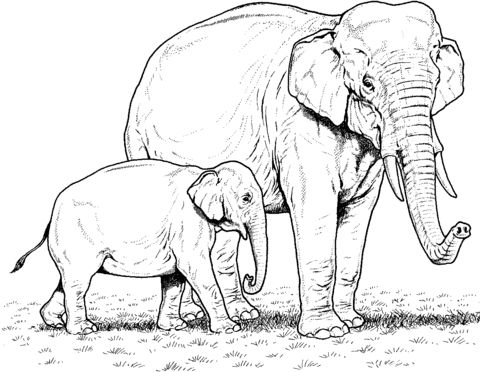 Mejores 37 imágenes de Elephant en Pinterest   Elefantes, Animales y ...