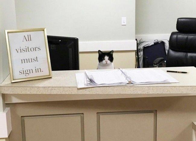 にゃんこの受付スタッフ現る? 介護施設の入居者ほっこり - ネタりか