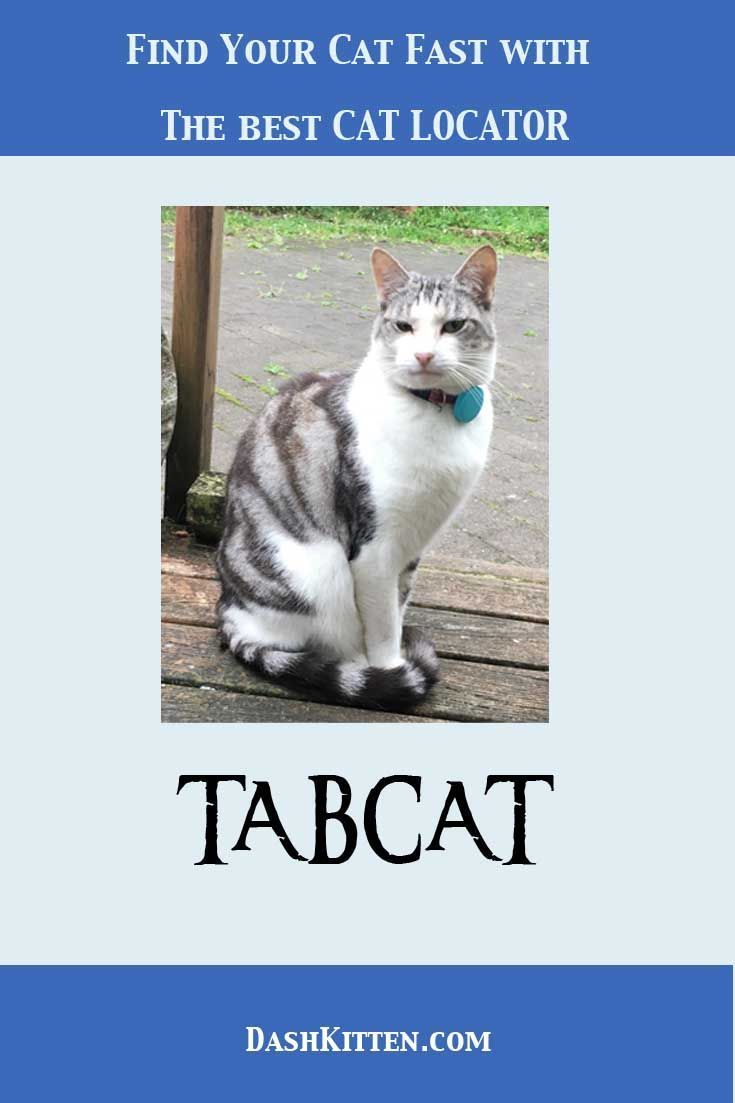 Even indoor cats can go missing. Remember the times your indoor kitty simply seemed to vanish int thin air? With the Tabcat you will be able to find them or your garden cats in no time.  Let us tell you how this works. #cattracker #catcare #catwatching #catlocator