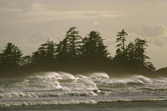 Clayoquot Sound Photos - Featured Images of Clayoquot Sound, Vancouver Island - TripAdvisor