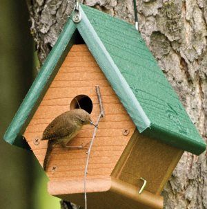 Wren house plans with detailed diagrams, detailed instructions and how to attract wrens. Choosing correct hole size, placement, video instruction and more.