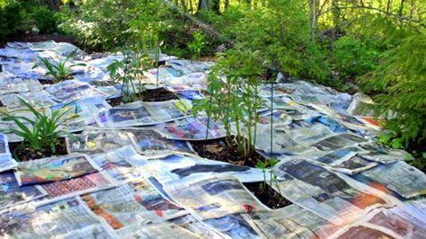 Když máte svou zahradu, nebo zahrádku, jistě si ji užíváte v každém směru. Nebo se o to alespoň snažíte. Co tedy zkazí každou radost všem zahrádkářům? Neustále se vracející plevel. Je téměř nemožné se ho zbavit. V dnešním článku se dozvíte, co však radí profesionální zahradník. Plevel už Vás tak …