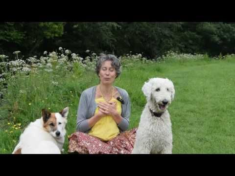 youtube donna eden hook up Find clarity when speaking and in confrontation with dondi dahlin - duration: 1:08 donna eden energy medicine 10,487 views.