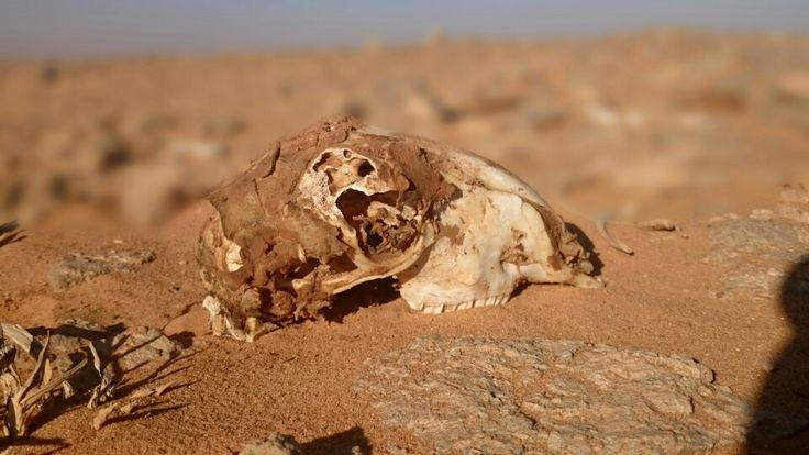 Desert and bones 2