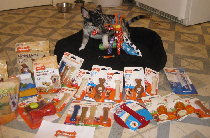 May's Lucky #Sweepstakes #Winners #nylabone #dogs http://www.nylabone.com/dog-house-chatter/2012/07/06/mays-lucky-sweepstakes-winners/: Dogs House, Nylabon Dogs, Dog Houses, Lucky Dogs, Dogs Treats