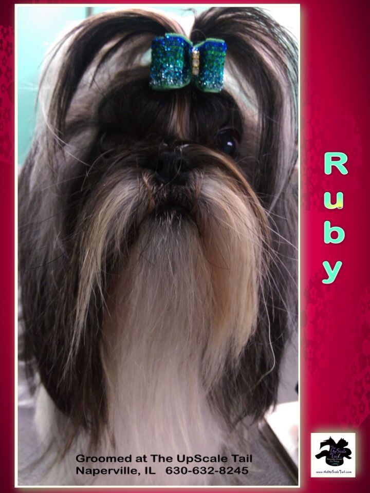 44 best creative color dog grooming images on pinterest the upscale tail pet grooming salon naperville il theupscaletail solutioingenieria Choice Image