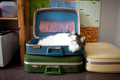 : Amazing Cat, Vintage Suitcases, Color, Cat Fans, Cat Love, Cute Cat, Wanna Vacations, Moo Cat, Animal