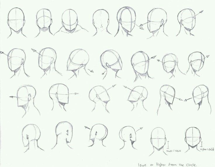 Hi This Is A Reference Of Different Angles The Head Hope It Helps