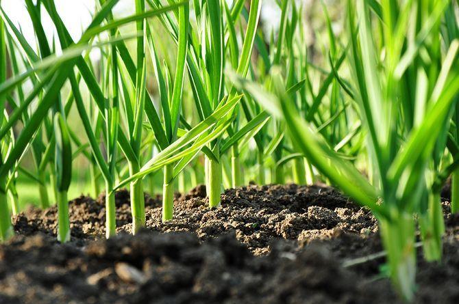 Что посадить в тени? Растения хорошо растущие в тени