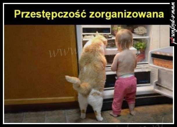 Przestępczość zorganizowana...
