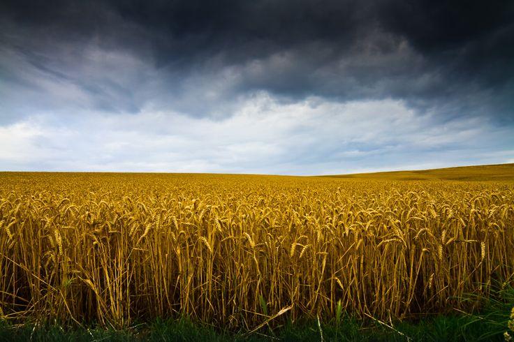 Photograph Blond comme les blés by Patrick Thuillier on 500px