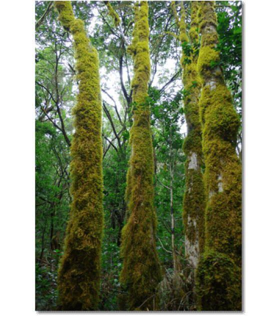 Dieses Photo entstand im Zauberwald von Las Creses auf La Gomera.
