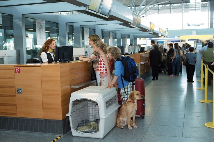 Nervous about traveling with Pets? Don't be! Yes, traveling with pets is a challenge and takes a solid plan of attack, but it's.