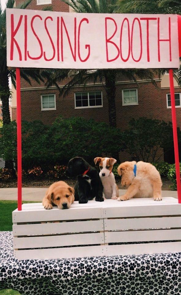 Pinterest Megsblog Mit Bildern Susse Tiere Susse Hunde Hunde
