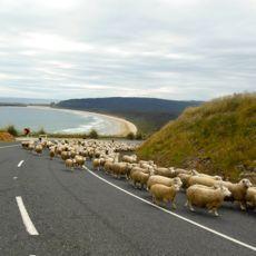 Husbil på Nya Zeeland