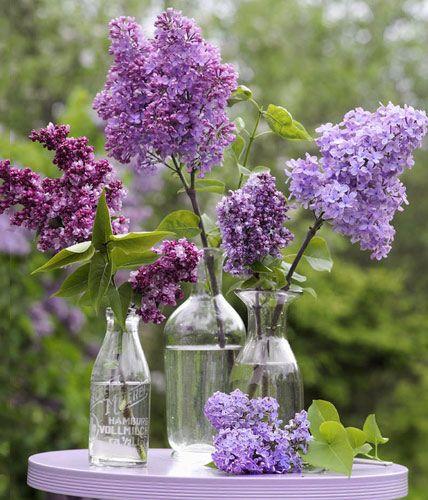 deko mit flieder arrangements in der vase flieder in. Black Bedroom Furniture Sets. Home Design Ideas