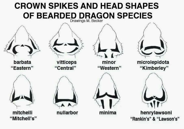 While this chart is often disputed based on details of head shape, it's still used by a large portion of the reptile community.
