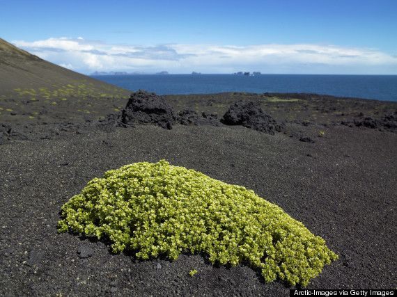10 Bucket-List Places You'll Almost Definitely Never Get To See-Surtsey, Iceland This is one of Earth's most pristine young ecosystems: it didn't even exist until debris from volcano eruptions created a little island during the 1960s.