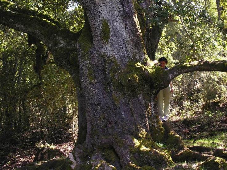 Alla scoperta di... vi invita per un fine settimana in escursione alla foresta di Montarbu a Seui.  Avrete la possibilità di trascorrere due giorni in questo splendido ambiente, effettuando escursioni nella foresta di Seui sabato e domenica e pernottando all' interno delle strutture presenti in foresta.