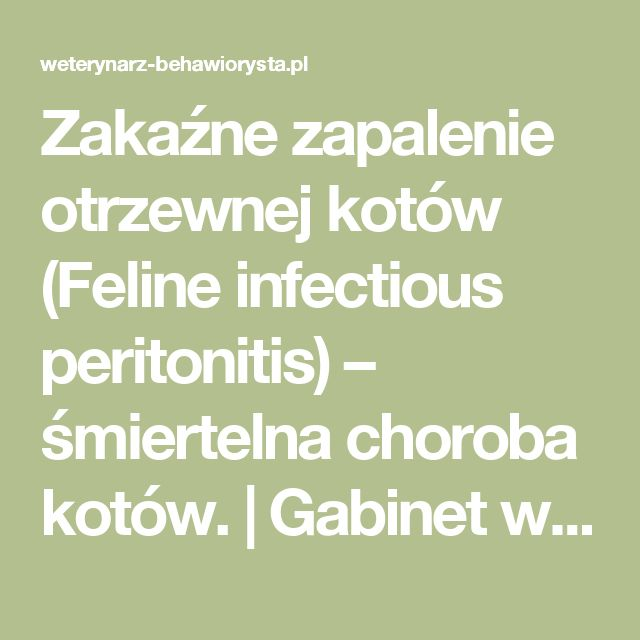 Zakaźne zapalenie otrzewnej kotów (Feline infectious peritonitis) – śmiertelna choroba kotów. | Gabinet weterynaryjny Katarzyna Gryglewska