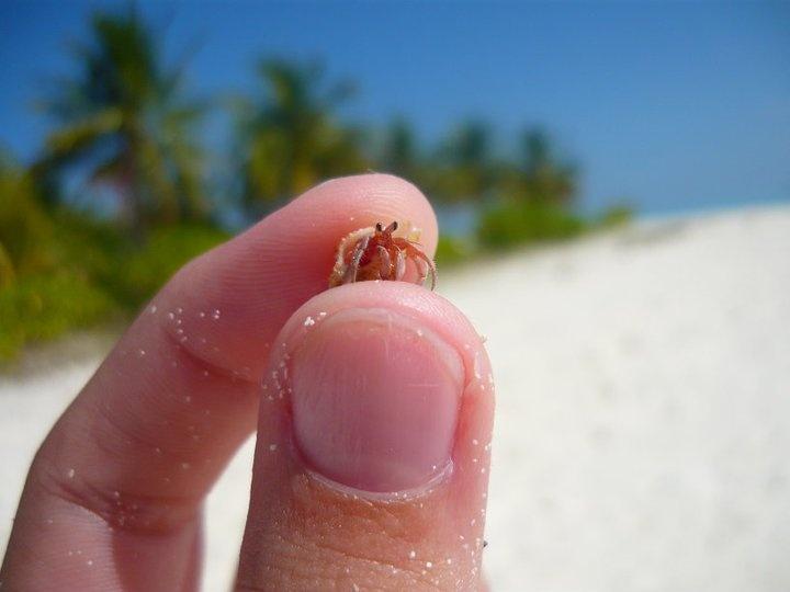 little friend in the maldives
