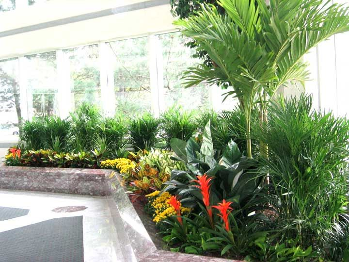 Project Gallery   Artscape Interior Plant Specialists .