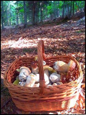 grzybobranie / grzyby / prawdziwki #grzyby #grzybobranie #mushrooms #las #forest #borowik #borowik #szlachetny #borowiki #boletus #prawdziwek #prawdziwki #runo-leśne #natura #Beskidy #Polska #Poland #grzyby-jadalne #grzyby-w-Polsce #małopolska #grzybiarz #grzyb