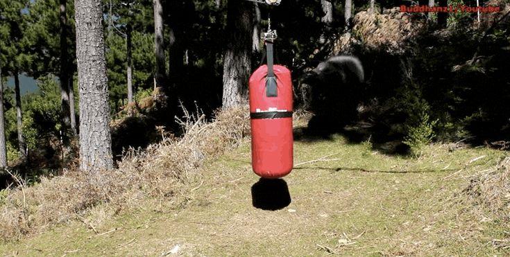 Este carnero está determinado a enseñarle a un saco de boxeo quién es el jefe aquí