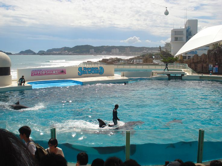 Sea World Tokyo, Dolphin show