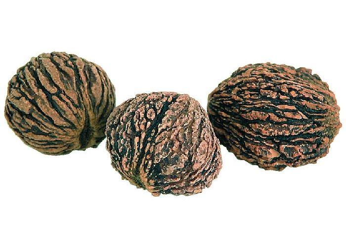 Czarny orzech (Juglans nigra)