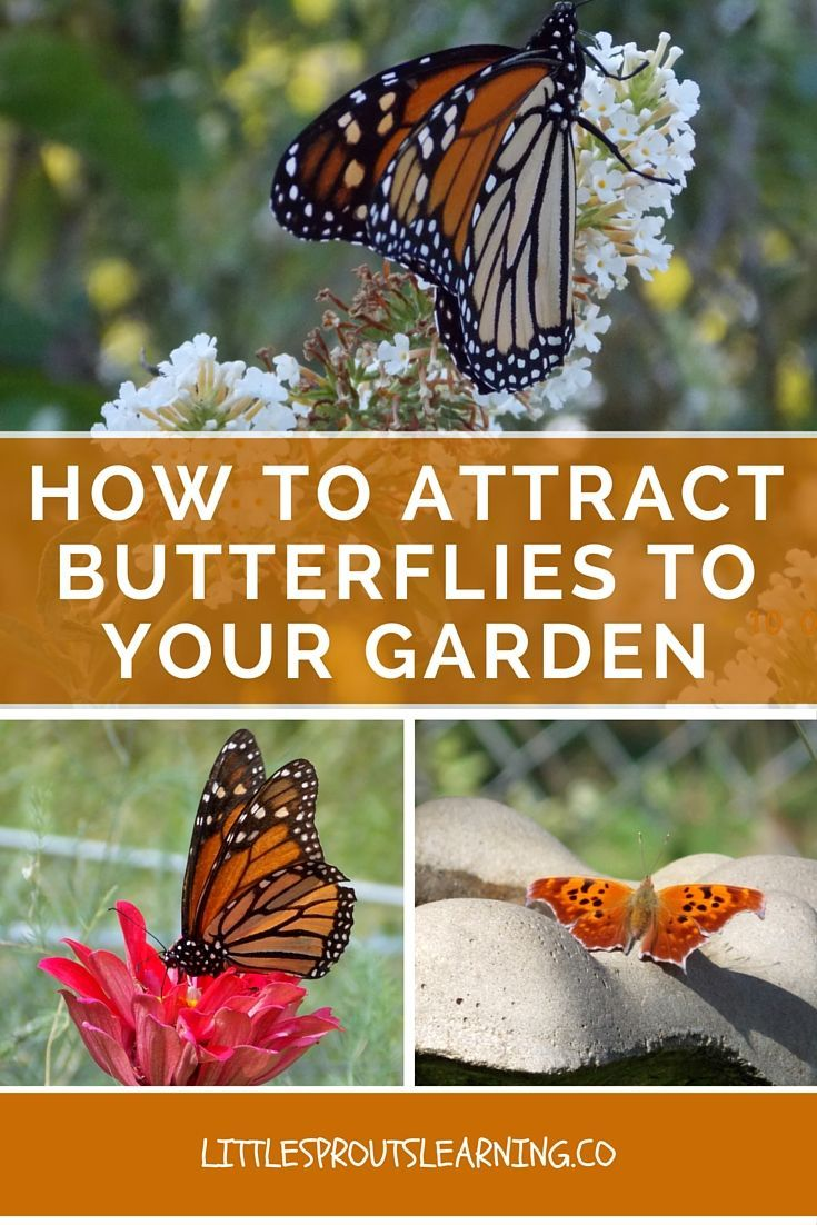 how to get rid of butterflies in garden