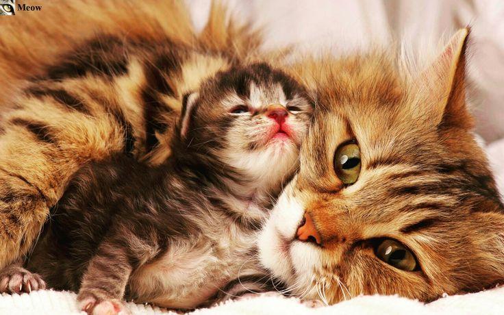 Meow for milk https://www.youtube.com/c/WeMeow #cat #cats #wemeow #meow #catlife #cutecat #catlove #lovecats #gatos #gatti #koty #katze #chats #kitty #kitten #kittens #lovecat #funnycat #cateye #beautifulcat #nicecat #amazingcat #catlooking #catofinstagram #catsoftumblr #catstagram #instapets #instacat #pet #pets