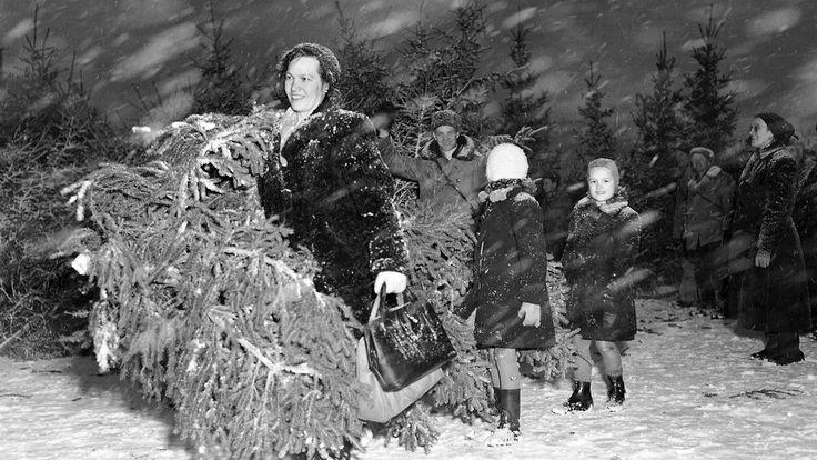 Joulukuusikauppaa lumisateessa 1950-luvulla. Copyright: Lehtikuva.