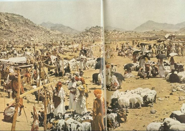 Hajj 1953: Pilgrims would keep their livestock with them during their Hajj.